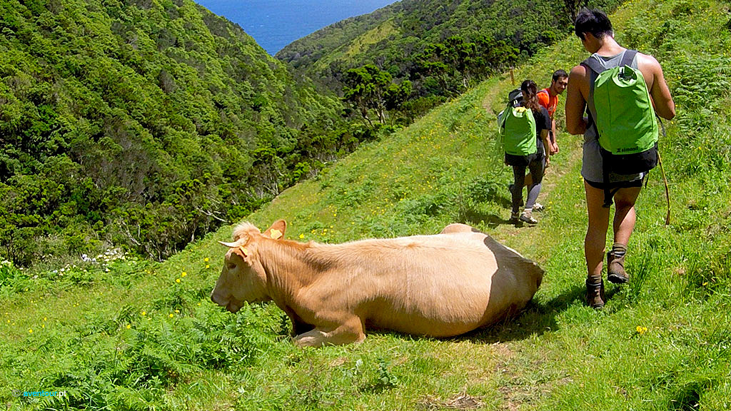 Walking Trails in Sao Jorge Island in Azores