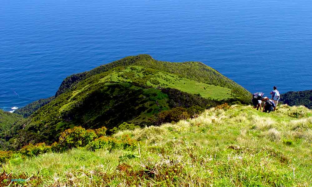 Walking Trail Faja Sanguinhal in Sao Jorge Island in Azores